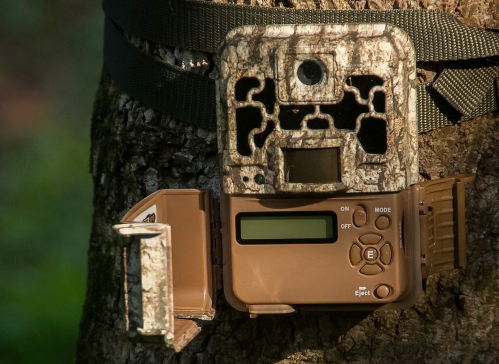 a trail camera attached to a tree